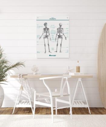 La planche Anatomie s'affiche sur mur blanc, dans une décoration lumineuse épurée, style maison de bord de mer.