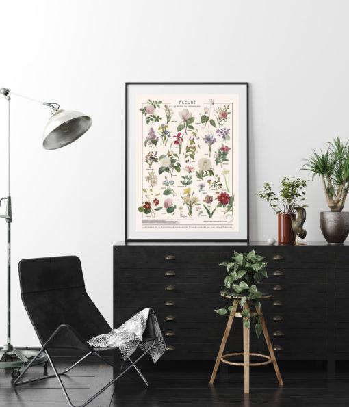 affiche d'illustrations anciennes de Fleurs