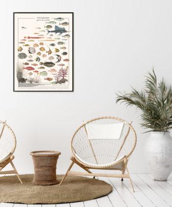 """L'affiche """"Poissons"""" revisite de superbes illustrations colorées de poissons exotiques, découverts parmi les trésors de la Bibliothèque nationale de France."""