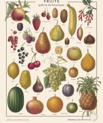 Affiche ancienne fruits
