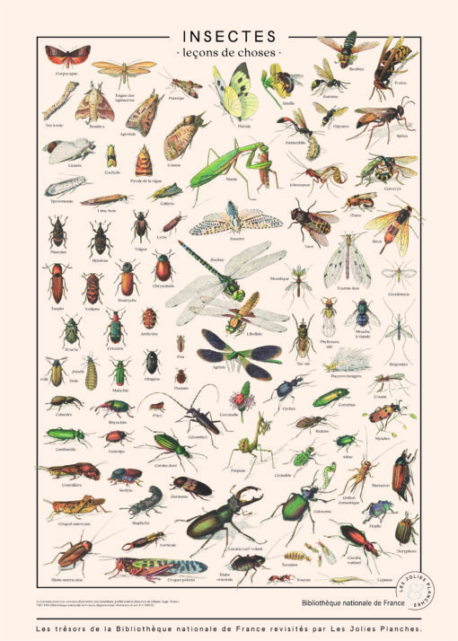 poster toutes les variétés d'insectes