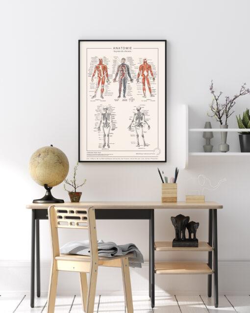 Affiche d'anatomie détaillée, illustrations anciennes