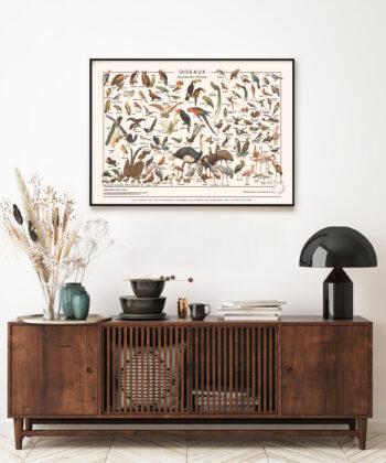 affiche-illustrations-encyclopediques-anciennes-oiseaux-les-jolies-planches