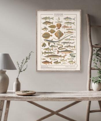 Affiche Poissons, illustrations encyclopédiques issues du Larousse pour tous de 1907, encadrée sur un mur gris perle, dans une décoration de bois clair.