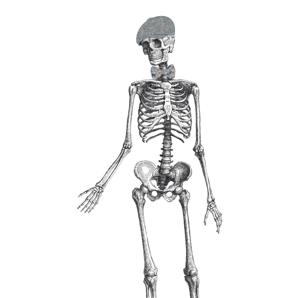 """Oscar, squelette illustré, issu de la planche """"Anatomie"""" des Jolies Planches"""
